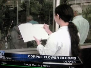 corpse flower artist